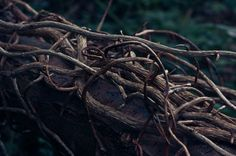 Into the woods the vines are thick. Trap you until you see what makes them tick…