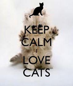 KEEP CALM I LOVE CATS