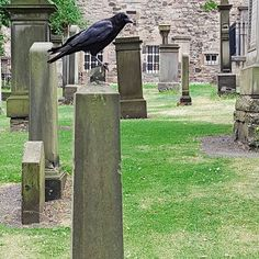 Visiting #canongatekirkyard  _____________________ #graveyard #scary #spooky #walkingaround #scotland #edinburgh #awesome_phototrip #lovescotland #edinburgh_snapshots #TopEdinburghphoto #edinburghstory #Loves_Edinburgh #GoVisitBritain #scotshots #scotlandshots #uk_shots #ukshots #thisisscotland #ig_scotland #ig_scot #edimburghblogger #visitedinburgh #edinburghlife #travel #edinburghhighlights #edinburghcity #ilovescotland #mycity #unlimitededinburgh