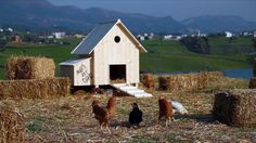 MAD | ROOSTER Chicken Coops, Albania, Rooster, Mad, Characters, Illustration, Coops, Illustrations, Chicken Coop Run