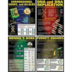 Heredity the blueprint of life heredity the tendency of a dna heredity poster set malvernweather Image collections
