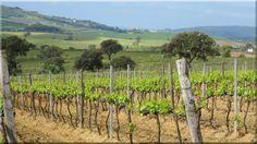 szőlőkaró Vineyard, Outdoor, Wine, Lawn And Garden, Outdoors, Vine Yard, Vineyard Vines, Outdoor Games, The Great Outdoors