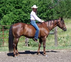 Do's and Don't's of Bareback Riding