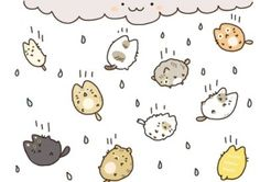 cat rain ^_^