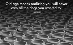 Old age means realizing you will never own all the dogs you wanted to. - Joe Gores #NeverLostAgain
