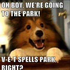 OH BOY! - Funny Dog Quotes - this makes me think of Payton. The sheltie even kinda looks like him. The post OH BOY! appeared first on Gag Dad. Funny Dog Captions, Animal Captions, Funny Animals With Captions, Funny Animal Quotes, Cute Funny Animals, Funny Animal Pictures, Funny Cute, Funny Dogs, Animal Humor