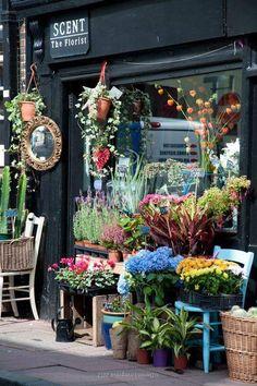 Scent - The Florist Flower Shop, Brighton, England Love Flowers, Beautiful Flowers, Nice Flower, Vitrine Design, Tee Shop, Brighton Uk, Flower Market, Flower Shops, Flower Cafe