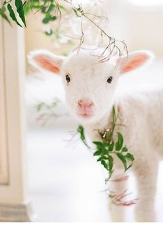 Cute! Little lamb, I want one