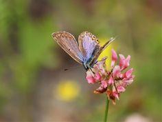 Kuvia neljästä vuodenajasta: Kukkia ja perhosia Moth, Insects, Plants, Animals, Animales, Animaux, Animal, Plant, Animais