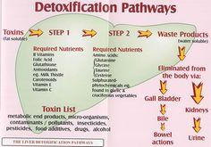 detox_pathways2