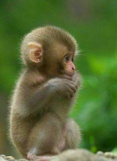 Cute little baby - Silvia v. - Cute little baby Cute little baby - Baby Animals Super Cute, Cute Little Baby, Cute Little Animals, Cute Funny Animals, Funny Monkeys, Baby Animals Pictures, Cute Animal Photos, Animals And Pets, Cute Monkey Pictures
