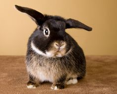 Learn what to expect if you're thinking of getting a pet rabbit. We'll discuss finances, indoor housing options, bunny proofing, litter training, and food.