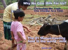 Why No Cow Milk for Us: Unraveling the Truth One Disease at a Time!