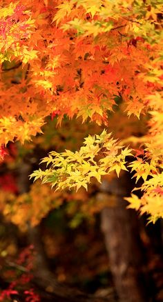 beautiful fall leaves...