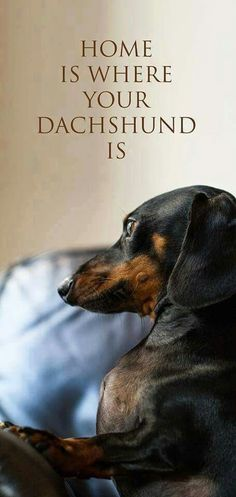 truth for all #Doxie owners