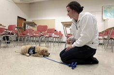 Training Your Own Service Dog | Vests For Service Dogs
