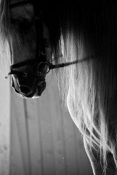 by javidelucar, via Flickr || BW grey english