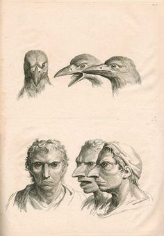 Lebrun's Physionomie, Plate 23: Human Figure and Crow