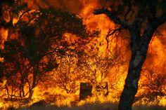 forest fire blaze picture | California Fires - The Big Picture - Boston.com