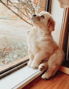 Super Cute Puppies, Cute Baby Dogs, Cute Little Puppies, Cute Dogs And Puppies, Doggies, Cute Wild Animals, Super Cute Animals, Cute Little Animals, Cute Funny Animals