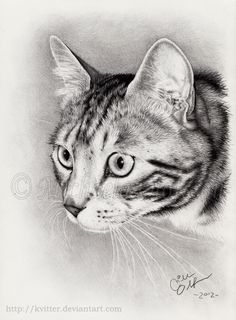 A commissioned portrait of a beautiful silver tabby named Dizel. Pencils used, HB, and staedtler. I Love Cats, Cute Cats, Pencil Drawings, Art Drawings, Types Of T Shirts, Pencil Portrait, Crayon, Cat Art, Cat Lovers