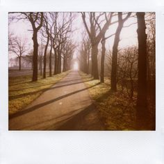this morning mist - Polaroid Spectra instant film - Westerwolde, The Netherlands