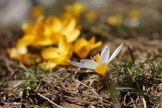 Toroslar'da bahar coşkusu…  Hasan Zorlu
