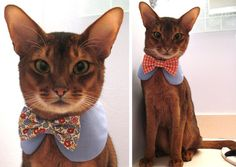 why yes i will have my cat in my wedding and but of COURSE he will be wearing one of these! its perfect because hes already a tuxedo cat!