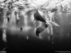 Whale Whisperers by Anuar Patjane - via @natgeo @anuarpatjane - #whale #whales #ocean #sea #undersea  #dive #diving #creative #photooftheday #instaartist #artoftheday #photo #photos #pic #pics #picture #pictures #picoftheday #ForInspiration #OsnLikesIt