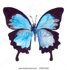 blue butterfly painting - Google Search