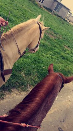 #Horses Horse Photos, Horse Pictures, Cavalo Wallpaper, Foto Cowgirl, Poses Photo, Applis Photo, Relationship Goals Pictures, Jolie Photo, Instagram Story Ideas