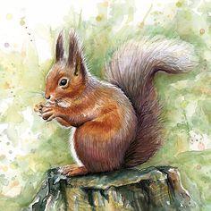 Nutty Squirrel Watercolor Art by OlechkaDesign