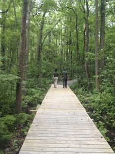 Aiken County's Horse Creek Water Trail Boardwalk #aikencounty #sc #watertrail