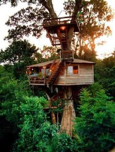 treehouse... with lookout perch. just in case... you never know.