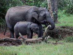 Rajgir Wildlife Sanctuary in Bihar, India