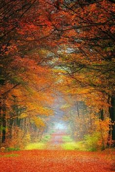 """♡ FALL THE MOSTEST """")"""