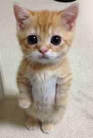 Výsledok vyhľadávania obrázkov pre dopyt cute animals