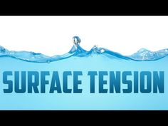 How does Surface Tension work? Grade 2 Science, Teaching Science, Tension Physics, Apologia Physical Science, Surface Tension, Middle School Science, Fourth Grade, Biology, Classroom