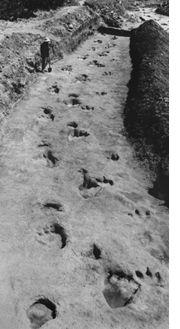 Glenrose trackway