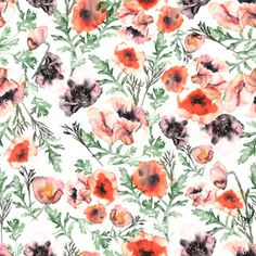 Botanical Watercolor Poppies in Folkloric Style Wild Flowers