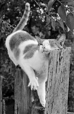 Funny Cats, Funny Animals, Cute Animals, Crazy Cat Lady, Crazy Cats, I Love Cats, Cool Cats, Wild Life, Kittens Cutest
