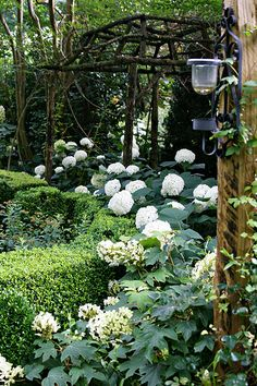 white gardens The opposite side. The white garden My Secret Garden, White Hydrangea, White Flowers, White Gardens, Gorgeous Gardens, Outdoor Gardens, Moon Garden, Dream Garden, Beautiful Gardens