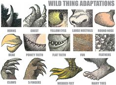 Wild Thing Adaptations