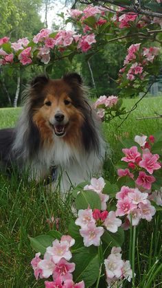Cute Dogs Breeds, Cute Dogs And Puppies, Dog Breeds, Doggies, Happy Animals, Nature Animals, Cute Animals, Dog Day Afternoon, Dog Wallpaper