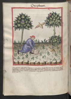 Cod. Ser. n. 2644, fol. 66v: Tacuinum sanitatis: Ova perdicum