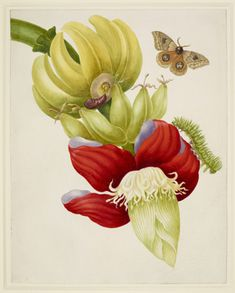 Branch of banana tree with caterpillar and moth
