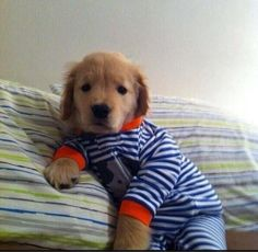 Baby Puppy in Pajamas!
