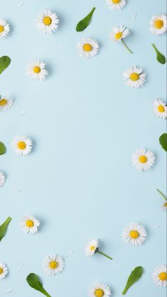 1 million+ Stunning Free Images to Use Anywhere Leaves Wallpaper Iphone, Daisy Wallpaper, Cute Patterns Wallpaper, Flower Background Wallpaper, Flower Phone Wallpaper, Sunflower Wallpaper, Summer Wallpaper, Aesthetic Pastel Wallpaper, Cute Wallpaper Backgrounds