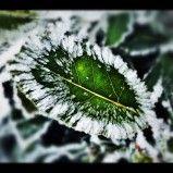 Proteggere le piante in vaso dal freddo