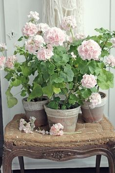 Types of Houseplant Bugs and Methods to Check Their Infestation Vibeke Design Geranium Plant, Pink Geranium, Vibeke Design, Pot Jardin, Cottage Garden Design, Deco Floral, Container Gardening, Succulent Containers, Container Flowers